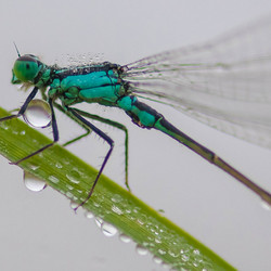 Waterdrager