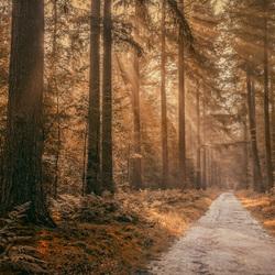Herst in het bos