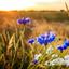 Zomer in de polder
