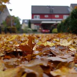 Herfst in Zwolle-Zuid