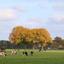 Alleen voor de bomen is het al herfst