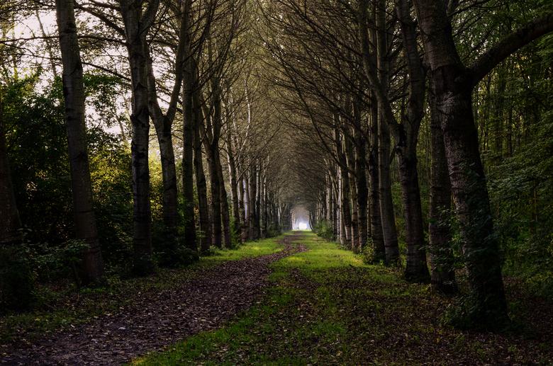 Eindeloos - Een mooi pad om te wandelen. Het lijkt wel eindeloos...