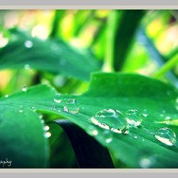 Waterbelletjes op blad