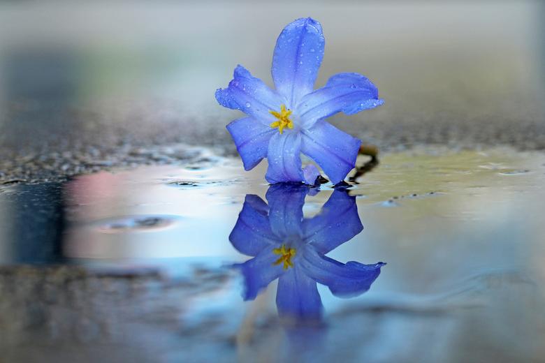 Bloempje  - een bloempje voor iedereen in moeilijke tijden .<br /> Groetjes marij.