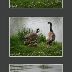 De ganse familie