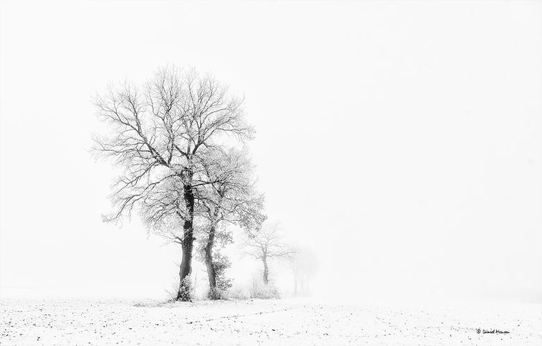 Small world - Sneeuwlandschap in de mist