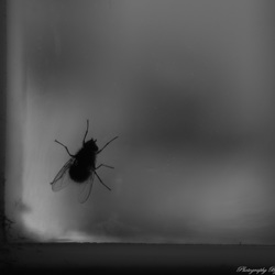 Fly in the corner of a window frame.