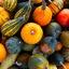 Pompoenen en Kalebassen