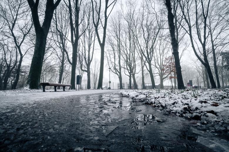 IJskoud. - Winterprik met mist.  Laag standpunt, 's morgens in het park, dun laagje ijs op het water. Door een laag standpunt meer accent op de s