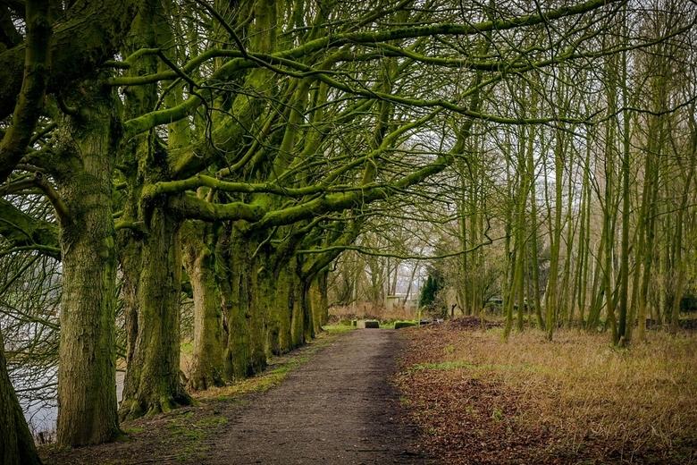 Bos pad - Bos pad langs de uiterwaard in Arnhem.