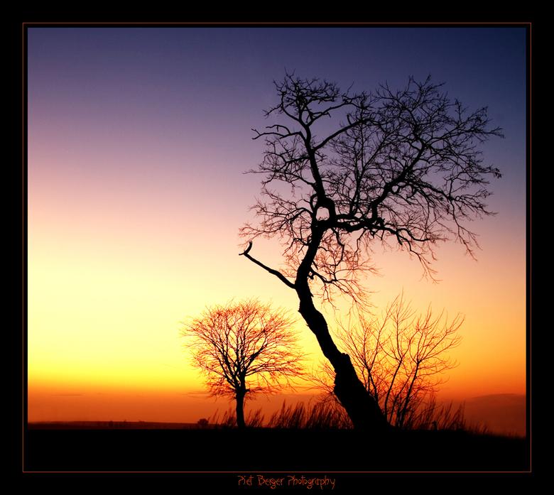 Sunset tree and silent sunset - Gisteravond zag ik tijdens het wandelen een geweldig licht aan de horizon, en natuulijk zat ik op dat geweldige moment