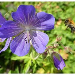 landings bloem