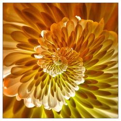 Droste Flower