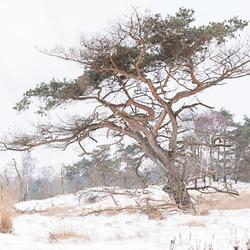 Winters maart