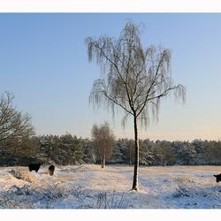 Brabants Winterlandschap