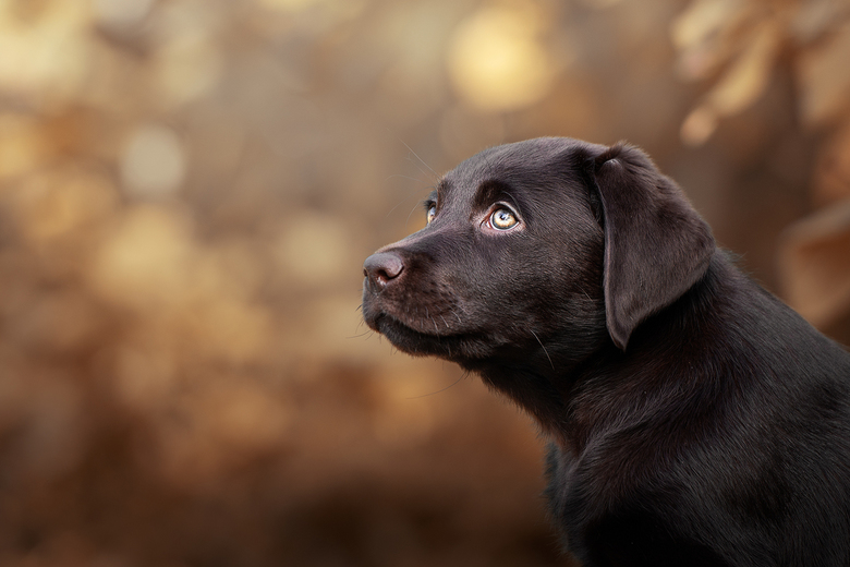 Perfect dog...
