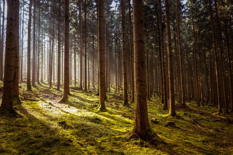 Lichtval in het Bos -