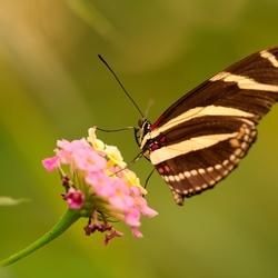 Butterfly-Flower-sunlight