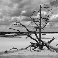Zand en hout