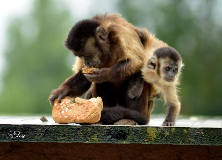 Sweet monkey !!! - olmse zoo <br />