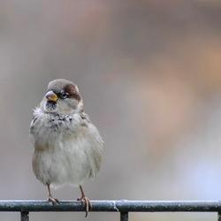 Hey Bird