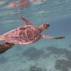 heerlijk onderwater
