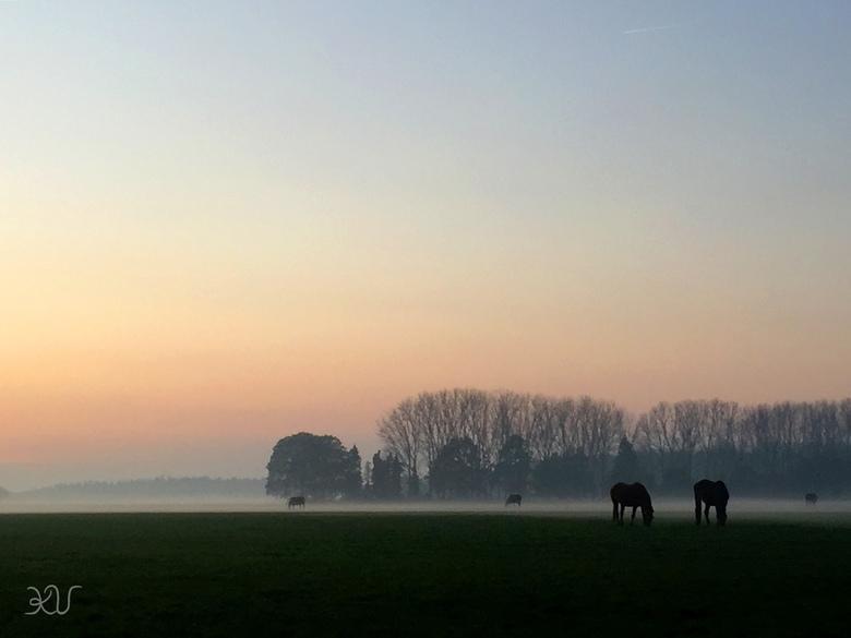 Horses - Onderweg naar mijn eigen paard kwam ik dit prachtige gebied tegen met heel veel paarden! Een prachtige mistige zonsondergang waar ik toch eve