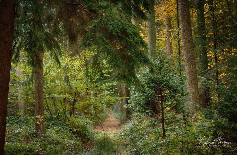 Herfst november 2018 03 - I love to walk in the forest for hours. Dreaming away with the sound of the waving trees. Smell the seasons and enjoy all th