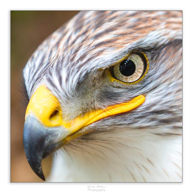 Bird_eye