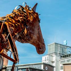 Er kijkt een ijzersterk paart naar een ijzersterke Philips.