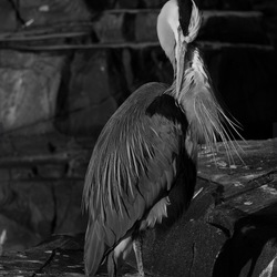 Reiger in the dark