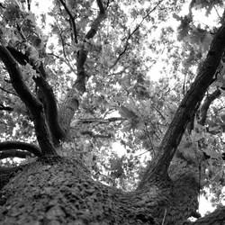 Zwart wit foto van een boom