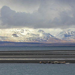 IJsland zeehonden spotten Osar
