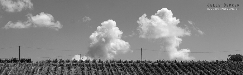 Wijnlandschap in zwart/wit - De druiven op deze foto zullen gebruikt worden voor een Cahors AOC wijn. Niet dat dat veel invloed heeft op de foto, maar