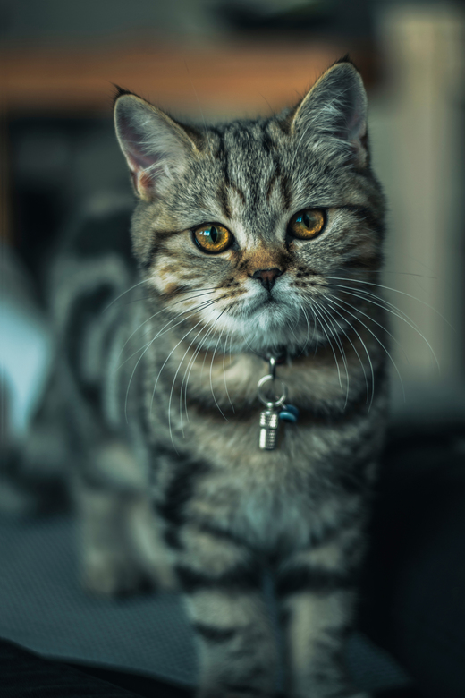 The cat - The look in his eyes makes you love him even more