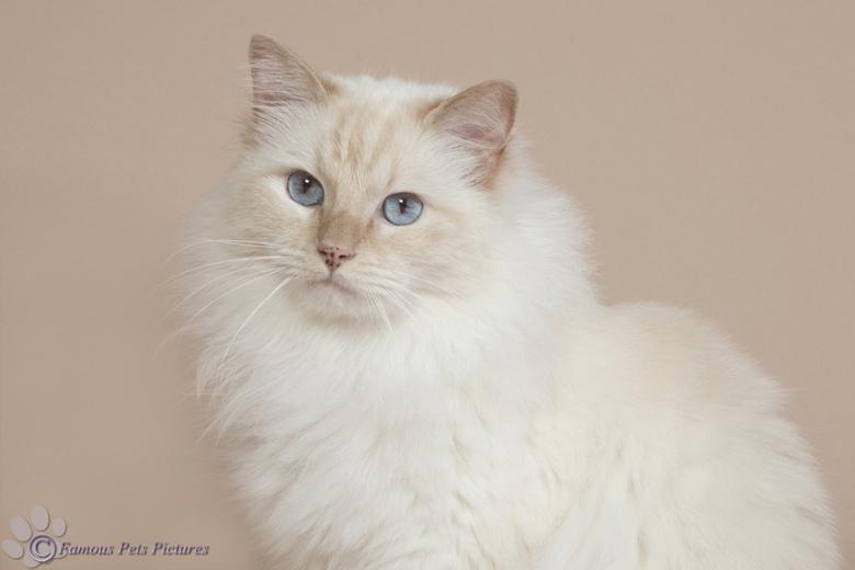 Famous 'soft en furry' - Een foto van Famous die ik in juli heb gemaakt. De beige achtergrond, maar nu in een bewerking met subtiele tinten. <br /> <