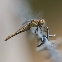 Dragonfly on a wire