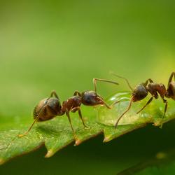 Mieren ...