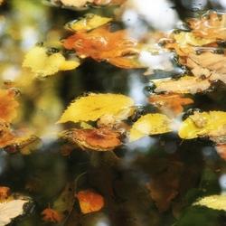 Herfst valt in het water...