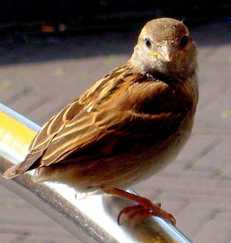 Een vogel op de leuning van een stoel. -