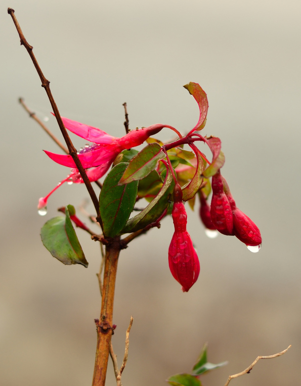 Plant or flower._01 - Ik ben normaal niet zo'n planten of bloemen of hoe ze ook heten fotograaf maar deze foto nam ik bovenaan een Welsh strandje