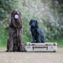 Cooper&Seeking