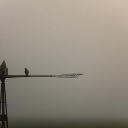 Bosmanmolentje met vogel