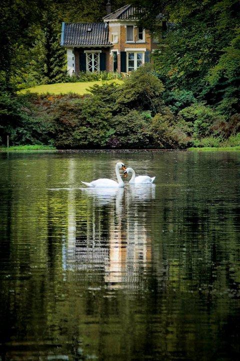 love - herfstfoto in sonsbeek