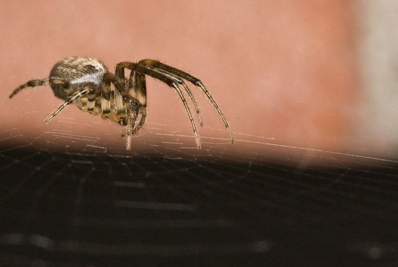 Spin op spinsel - Nog een oefening met mijn 100mm lens. Ik heb ook bij deze foto een ringflitser gebruikt. Ik zie dat je daardoor wel schittering krij