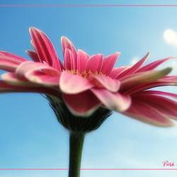 Pink Ribbon2!!