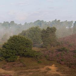 Heath and trees