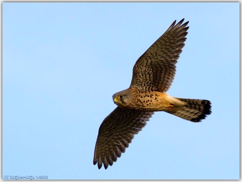 Gelukkig weer voorbij!! - Gelukkig voor de vogels is het weer voorbij die herrie en luchtvervuiling! opgelucht weer lekker jagen....