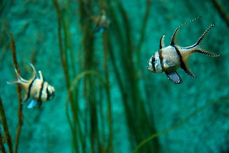 Aquarium  - Foto gemaakt bij de aquarium in Artis