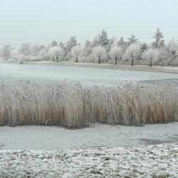 Bevroren vijver